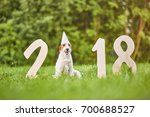 cute fox terrier wearing party... | Shutterstock . vector #700688527
