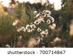 beautiful flower at sunset   Shutterstock . vector #700714867