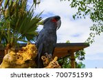 cockatoo at bali zoo  indonesia | Shutterstock . vector #700751593