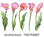 watercolor set of flowers  hand ...   Shutterstock . vector #700796887