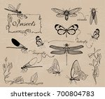 vector illustration. pen style... | Shutterstock .eps vector #700804783