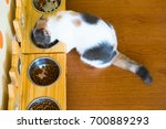 top view of hungry cat is... | Shutterstock . vector #700889293