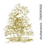 tree drawing on white. sketch...   Shutterstock .eps vector #700939303