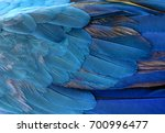 colorful of blue and yellow ... | Shutterstock . vector #700996477