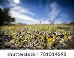 wildflowers bloom in the desert ...   Shutterstock . vector #701014393