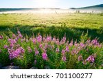the flowers of willow herb... | Shutterstock . vector #701100277