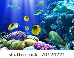 Photo Of A Coral Colony On A...