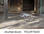 a beautiful cat lies at the... | Shutterstock . vector #701397643