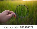 magnifying glass scan green... | Shutterstock . vector #701590027