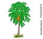 Papaya Tree Isolated For...