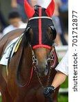 race horse | Shutterstock . vector #701712877