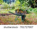 Wheelbarrow Full Of Flowers In...