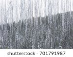snow on trees and road in... | Shutterstock . vector #701791987