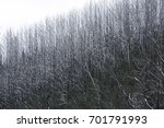 snow on trees and road in... | Shutterstock . vector #701791993