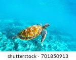 sea turtle in turquoise blue... | Shutterstock . vector #701850913