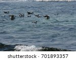 fly seagull. seagull and sea.... | Shutterstock . vector #701893357