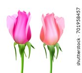 realistic roses bud with stem... | Shutterstock .eps vector #701958457