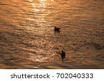 bird silhouettes at sunset | Shutterstock . vector #702040333