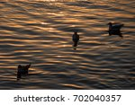 seagulls silhouettes at sunset | Shutterstock . vector #702040357