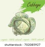 cabbage detailed vector...   Shutterstock .eps vector #702085927