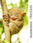 Small photo of Tarsier monkey in natural environment