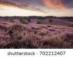 Purple Heather Hills In Bloom...