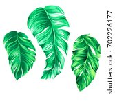 vector palm illustrations ... | Shutterstock .eps vector #702226177