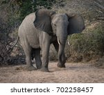 young bull african elephant... | Shutterstock . vector #702258457