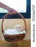 woman hand is holding basket... | Shutterstock . vector #702266707