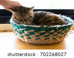 woman hand is touching tabby... | Shutterstock . vector #702268027