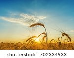 orange sunset over field with...   Shutterstock . vector #702334933