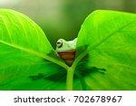 dumpy frogs hide behind the leaf