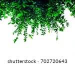 background wallpaper green