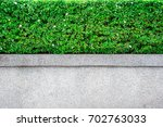 beautiful tree fence  green... | Shutterstock . vector #702763033