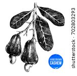 hand drawn cashew tree branch... | Shutterstock .eps vector #702803293