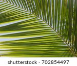 simple palm leaf background | Shutterstock . vector #702854497