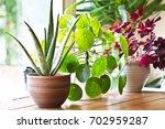 House Plants Display. Indoor...