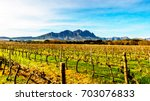 vineyards in the wine region of ... | Shutterstock . vector #703076833