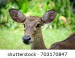 Small photo of Portarit Eld Deer