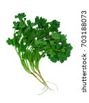 Small photo of coriander with root on white background, coriander known as Pakuchi in Thai name, its a distinctive strong flavor and smell unpleasant, but enthusiastic fans describe it as refreshing