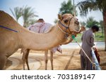 camel closeup | Shutterstock . vector #703189147