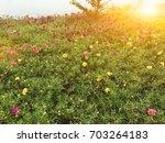 beautiful pink flowers... | Shutterstock . vector #703264183