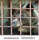 brown bear in a cage | Shutterstock . vector #703351837