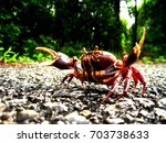 Small photo of Asian crab