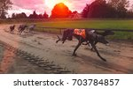 greyhounds racing in the sunset | Shutterstock . vector #703784857