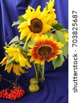 Small photo of Sunflowers in a transparent glass vase on abstract background with wild pears and red ash