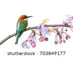 chestnut headed bee eater or... | Shutterstock . vector #703849177