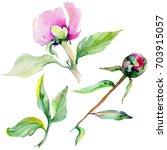 wildflower peony flower in a... | Shutterstock . vector #703915057