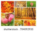 collection of photos with... | Shutterstock . vector #704092933
