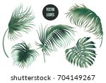 vector palm leaves  jungle... | Shutterstock .eps vector #704149267